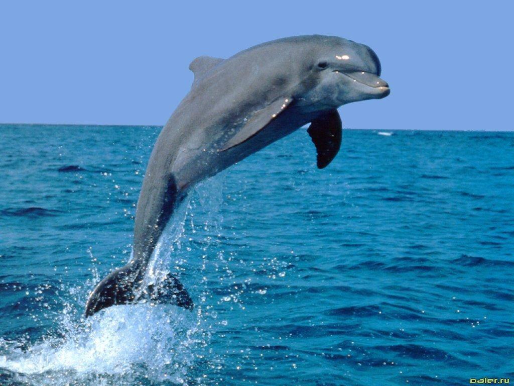 фото дельфинов в море для рабочего стола
