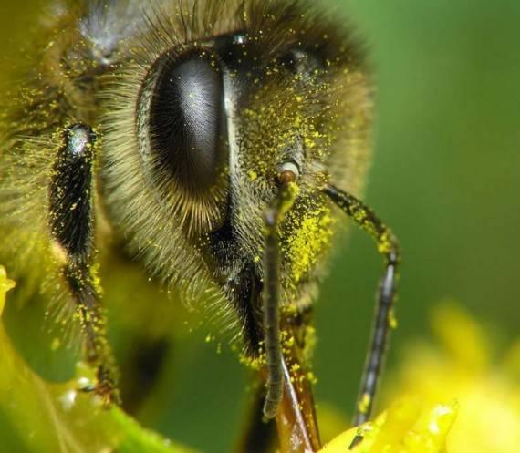 Почему исчезают пчелы и тараканы?