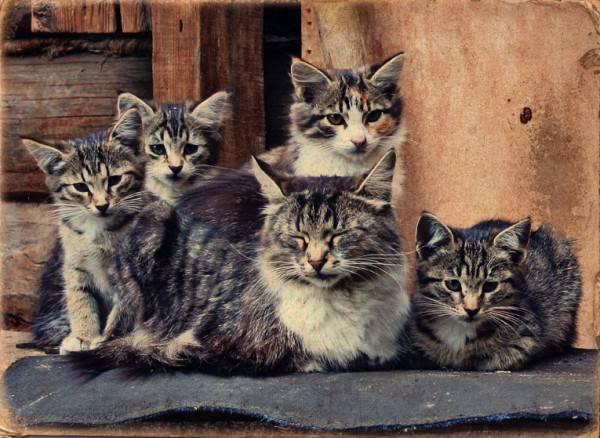 Как кошки стали домашними