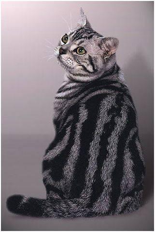Породистые кошки rndnet