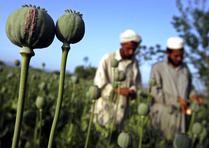 http://tainy.net/wp-content/uploads/2010/10/afghan-opium-polytricks.jpg height=306
