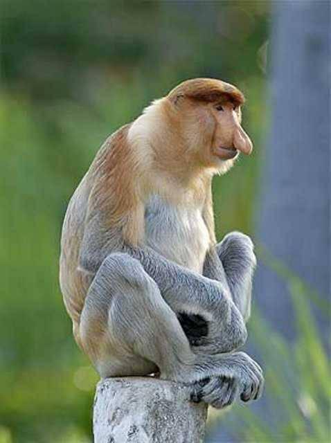 Невероятные опыты по скрещиванию человека с обезьяной