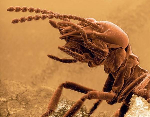 Самка комара желтой лихорадки.