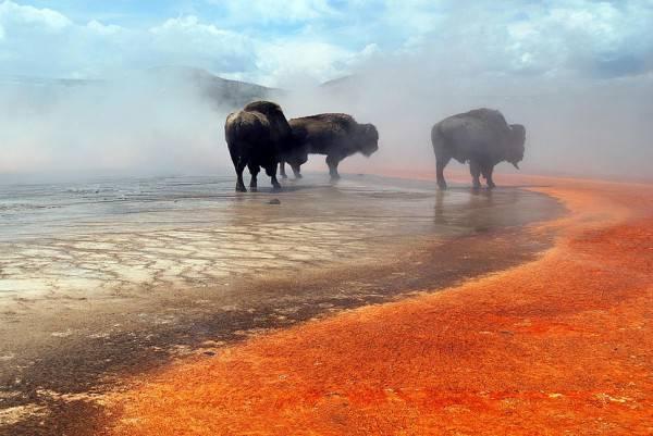 Спящие вулканы - угроза человечеству?