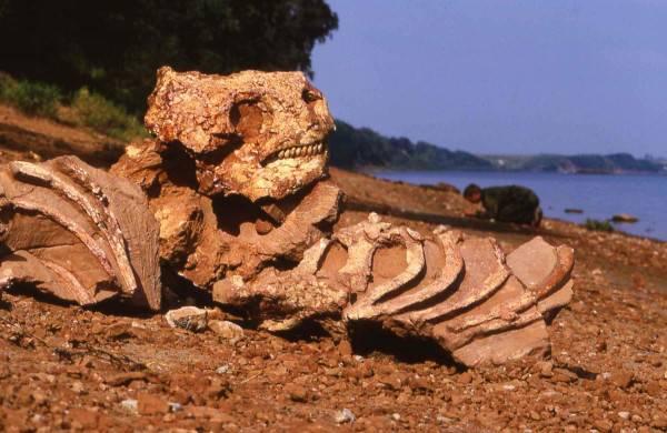 Деревни Нижегородской области терроризирует ящер
