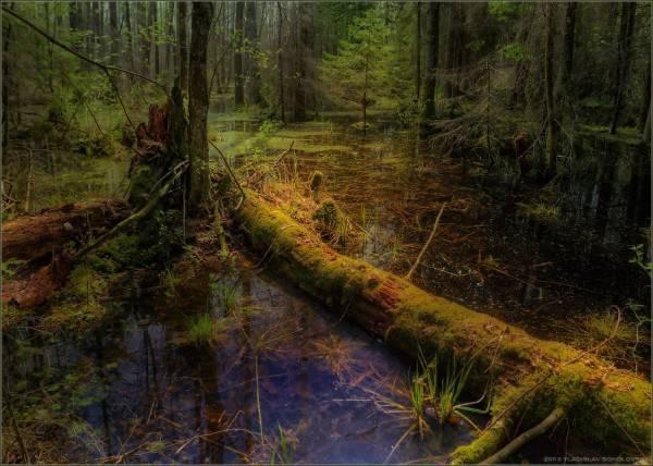 В болотных топях хранится еще множество.
