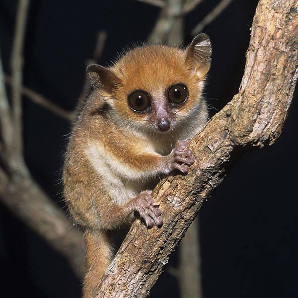 На Мадагаскаре обнаружено 615 новых растений и животных