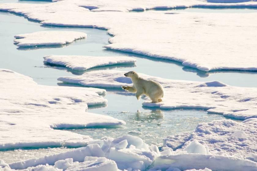 Greenpeace предлагает России добывать в Арктике не нефть, а рыбу