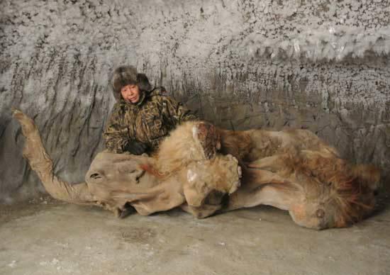 Сенсационная находка: в Якутии нашли идеально ...