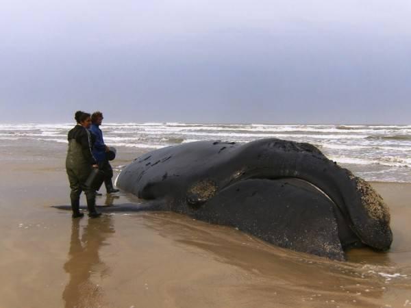 Киты и дельфины выбрасываются на берег из -за НЛО