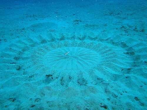 Загадка подводных кругов