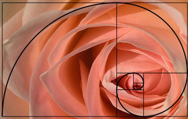 golden-spiral-applied-photography-21