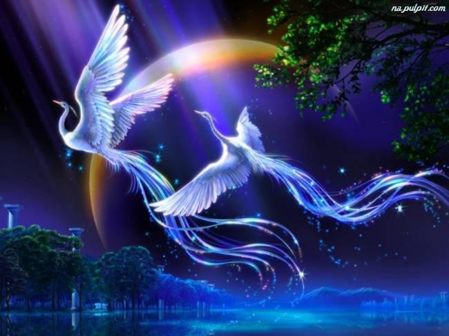 piekne-ptaki-mistyczne