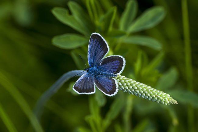 Раскрыта необычная связь между бабочками и американскими базами