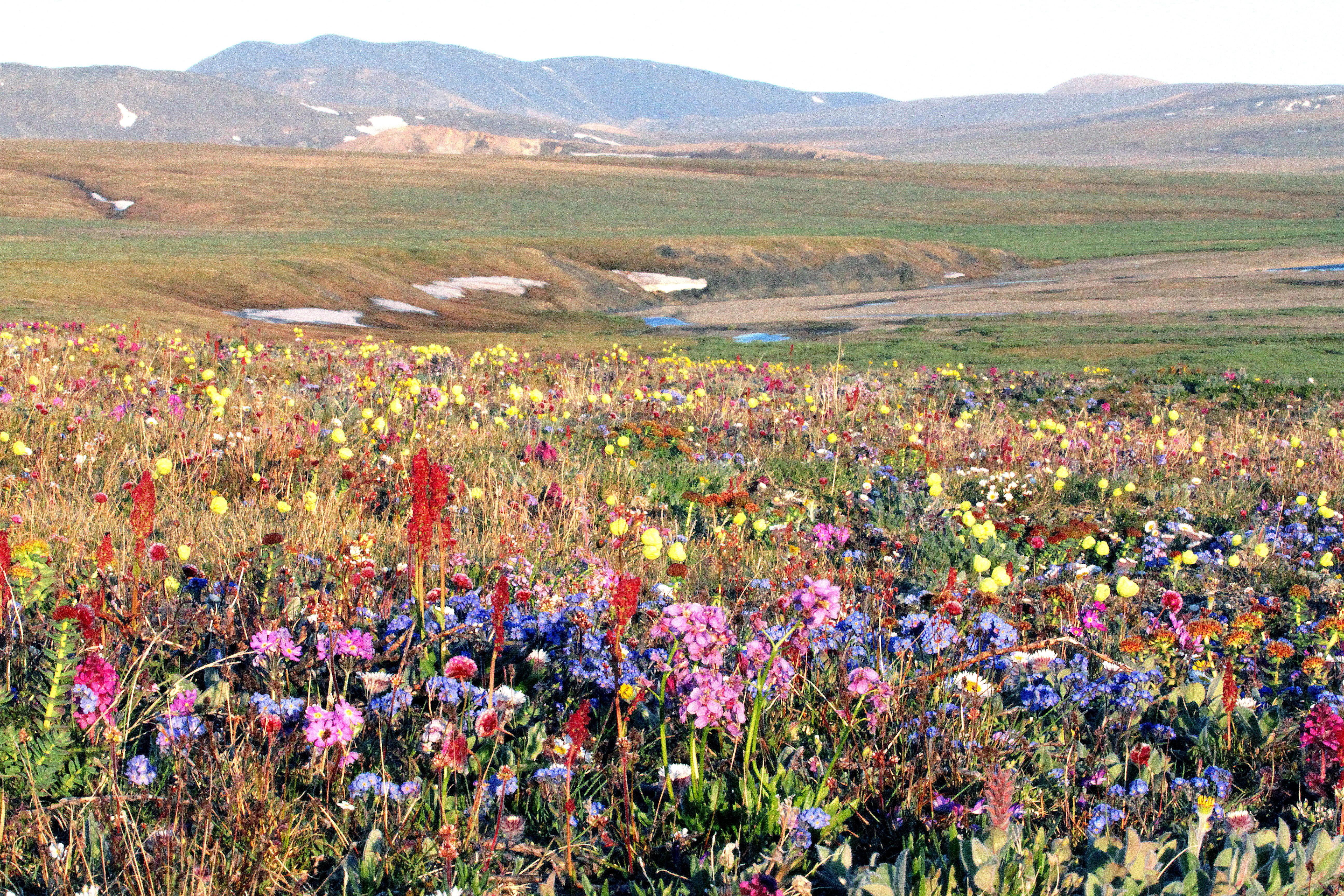 Климатологи из России пообещали Сибири цветущее будущее
