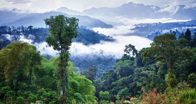 Амазонские джунгли могут вызывать дожди