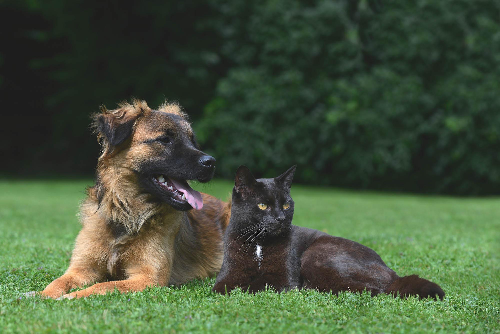 Кошки против собак