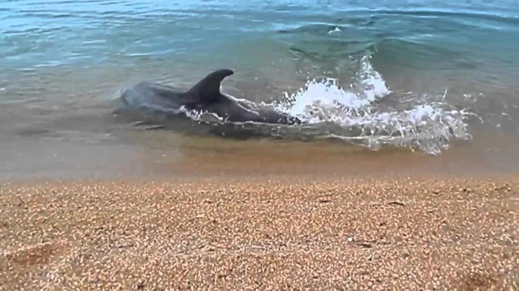дельфины в Керчи