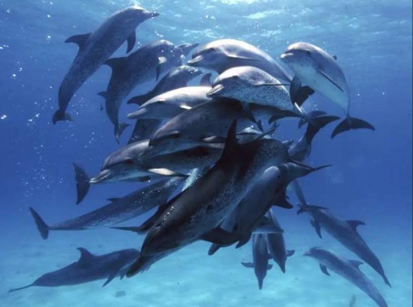 дельфины стая
