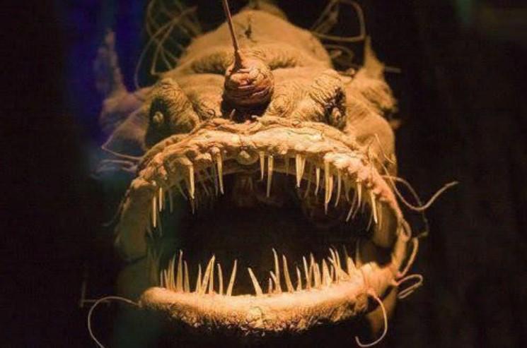 марианская впадина чудовище