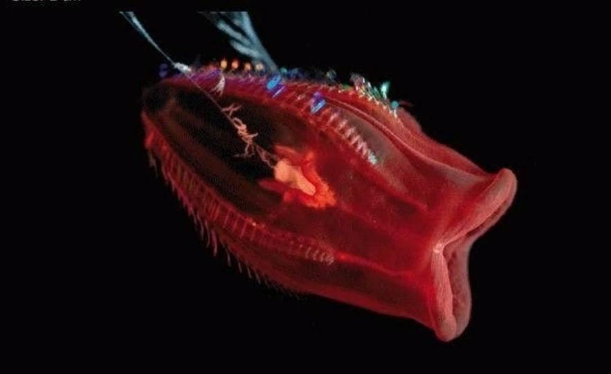 марианская впадина морское животное