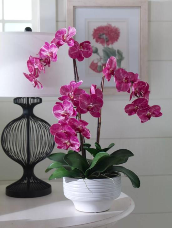 орхидея малиновая
