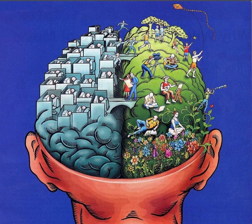 2 полушария мозга