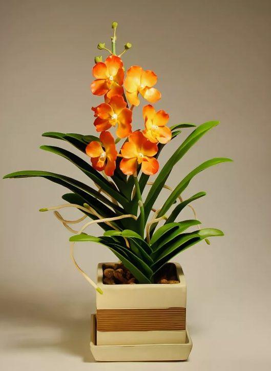 орхидея оранжевая