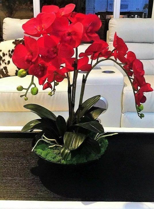 орхидея красная