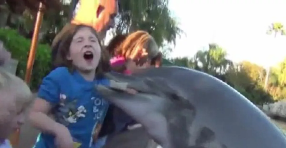дельфин укусил девочку