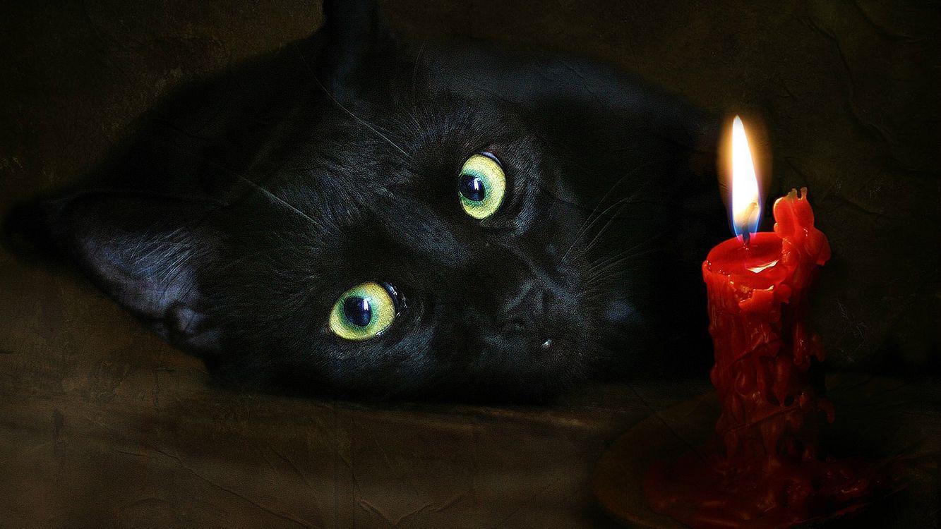 Почему стоит завести кота — очень кратко, какая польза от кошек для здоровья человека, кошки человеку лечат сердце