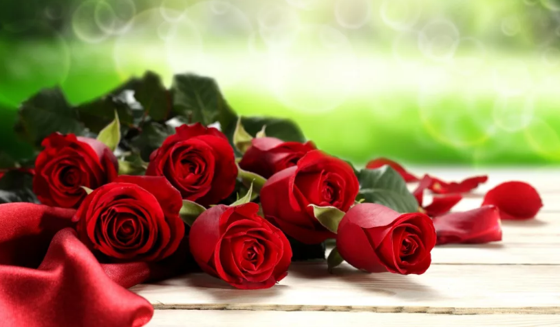 бутоны красных роз