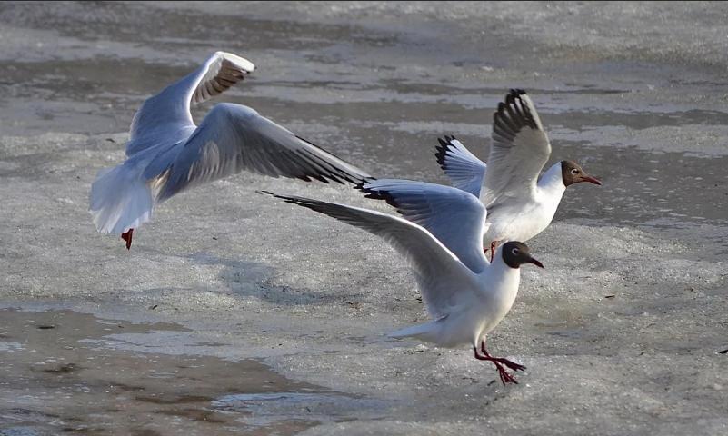 чайки 3 птицы у моря