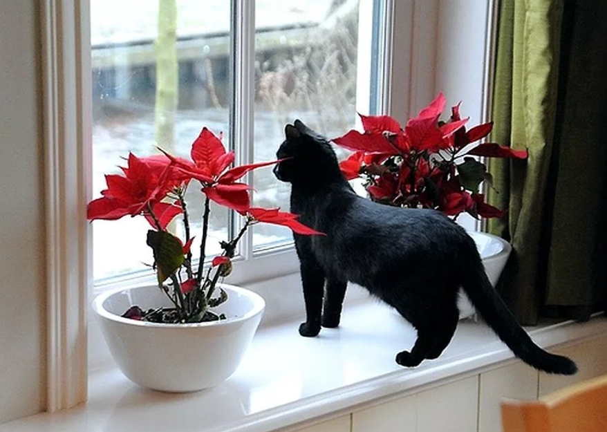 черный кот у окна