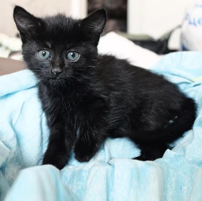 черный кот дома