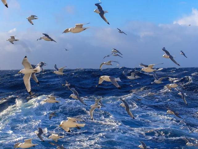 чайки увидели косяк рыб