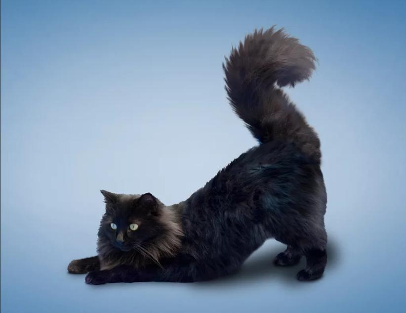 черный кот потягивается