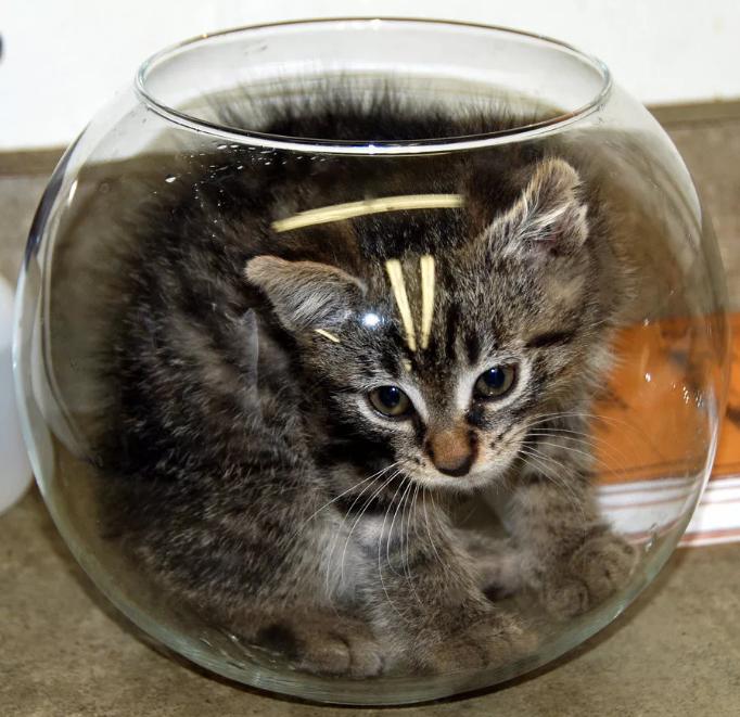 кошка разбила стеклянную вазу аквариум