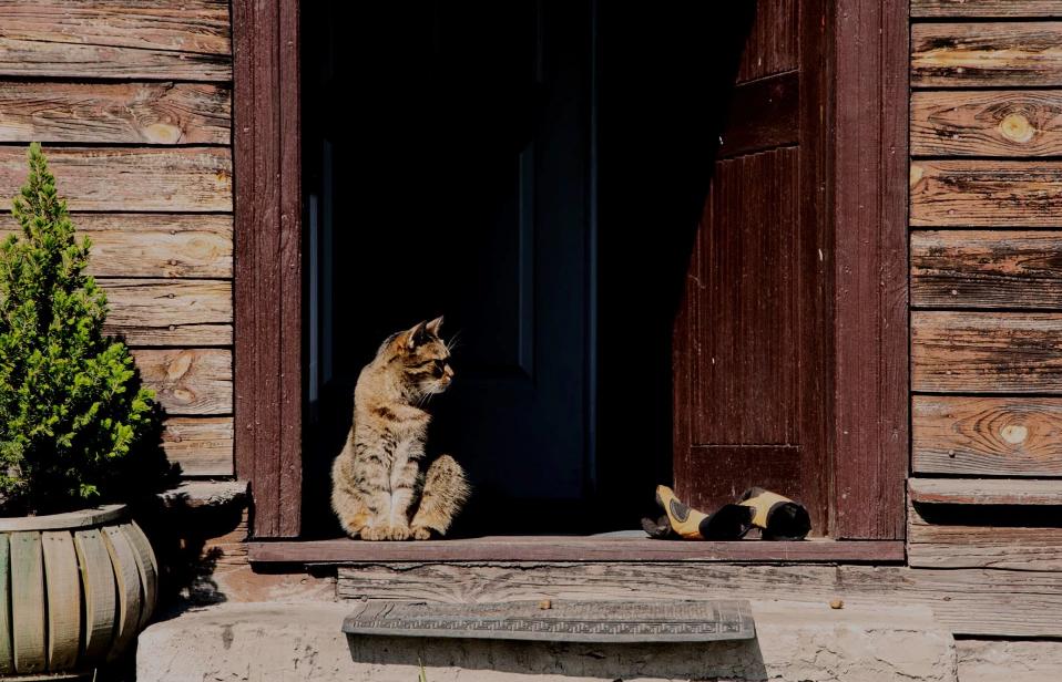 порог дома кошка