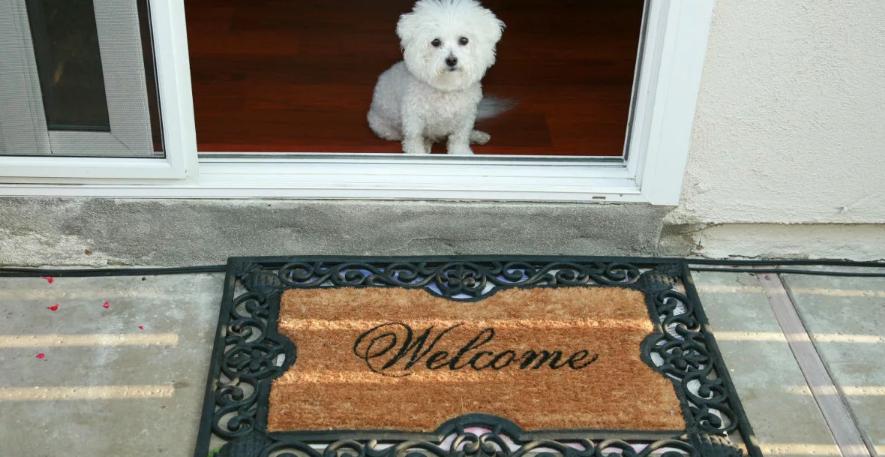 дверь и собака у входа