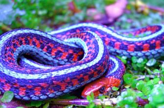 Убить змею: примета