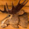 Стоит ли держать рога в доме, какие суеверия с этим связаны