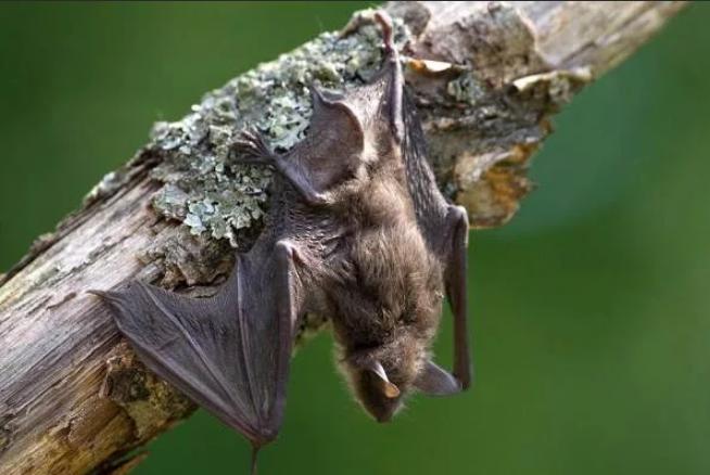 летучая мышь на дереве