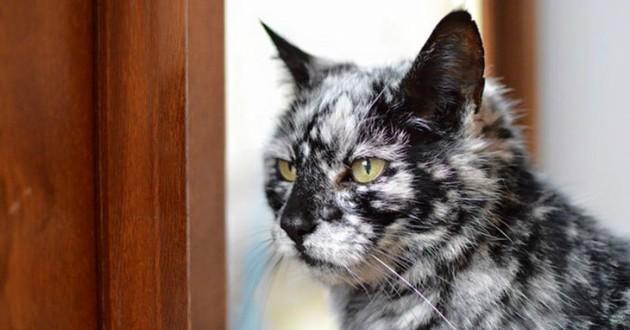 Необычный черно-белый окрас у кота