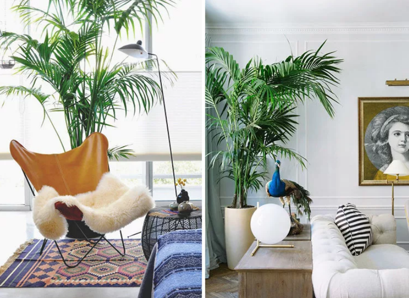 пальма дома в интерьере