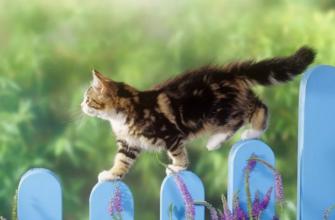 Почему в доме не приживаются кошки?