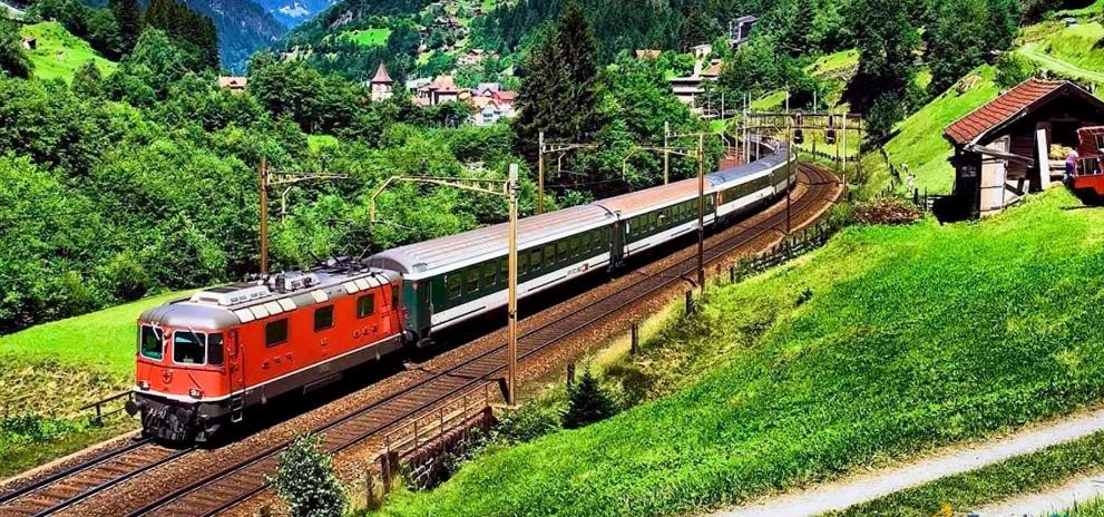 поезд идет среди лесов