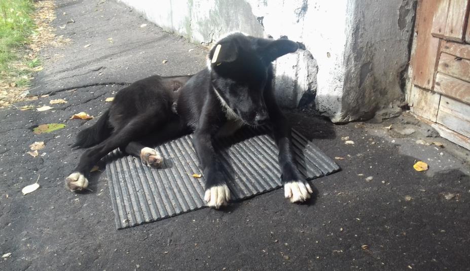 прибился пес к дому