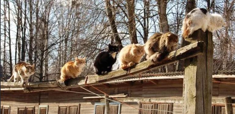 Коты в марте