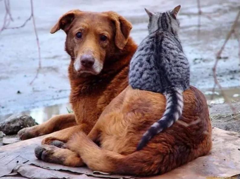 встреча с собакой на дороге
